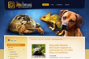Web Želvy Čtvercová