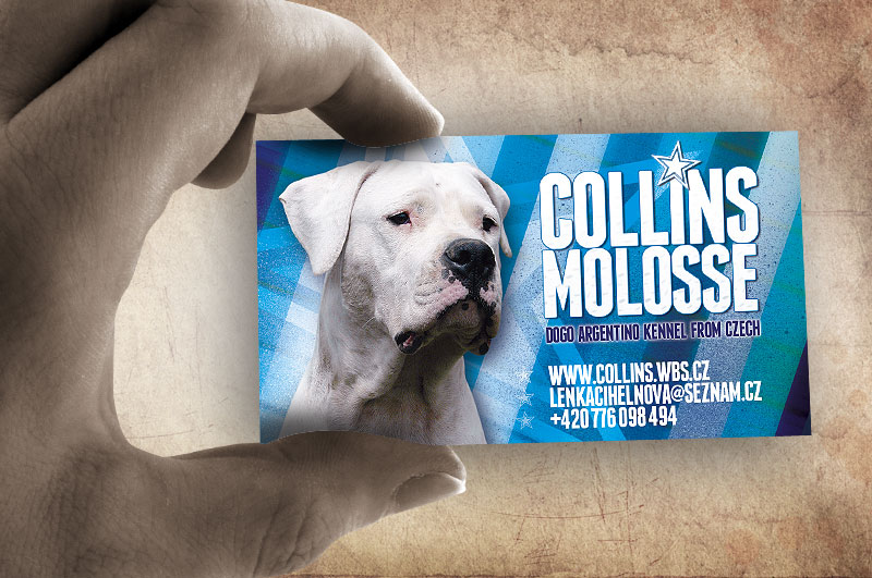 Grafický návrh a tisk vizitky Dogo Argentino CHS Collins Molosse