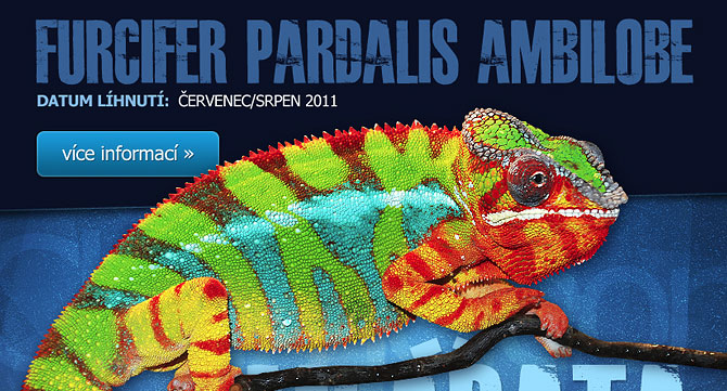 Reference - grafika a realizace inzerátu prodej chameleonů