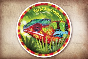 Terachameleons.com - samolepka na auto zdarma