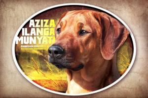 AZIZA - rhodéský ridgeback a jeho samolepka na auto