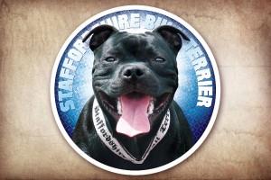 Staffordshire Bull Terrier – samolepky na auto